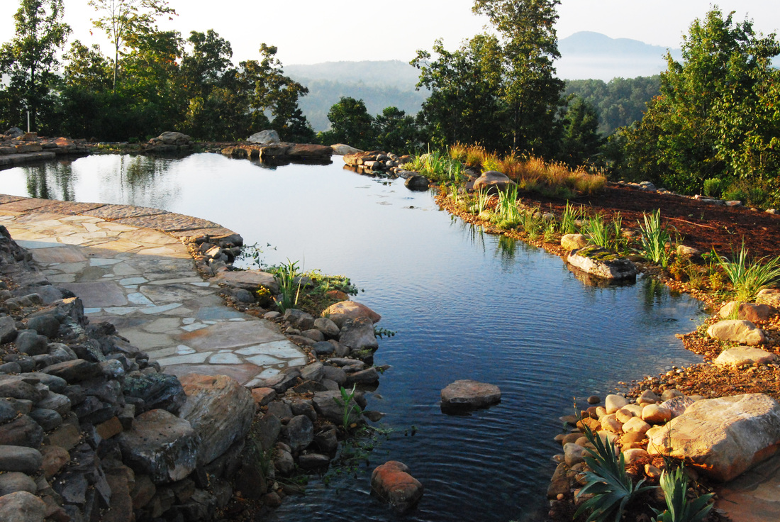 Blog natural swimming pools ponds design construction for Pond swimming pool