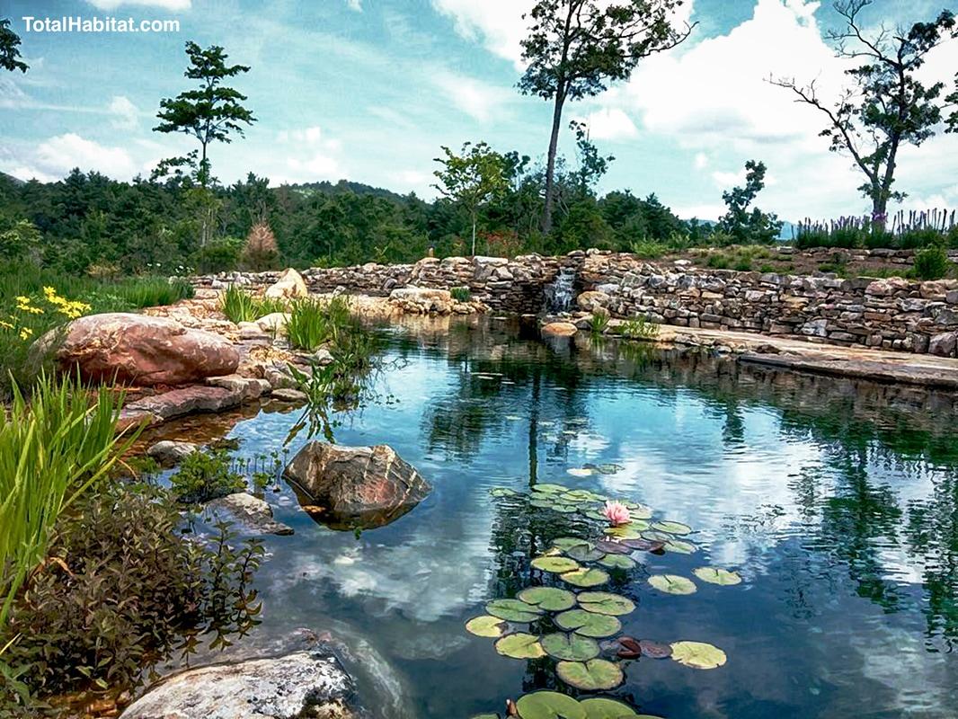 About Natural Swimming Pool/Ponds - TOTAL HABITAT