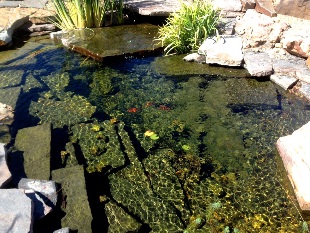 Can you have fish in a Natural Swimming Pool? - TOTAL HABITAT