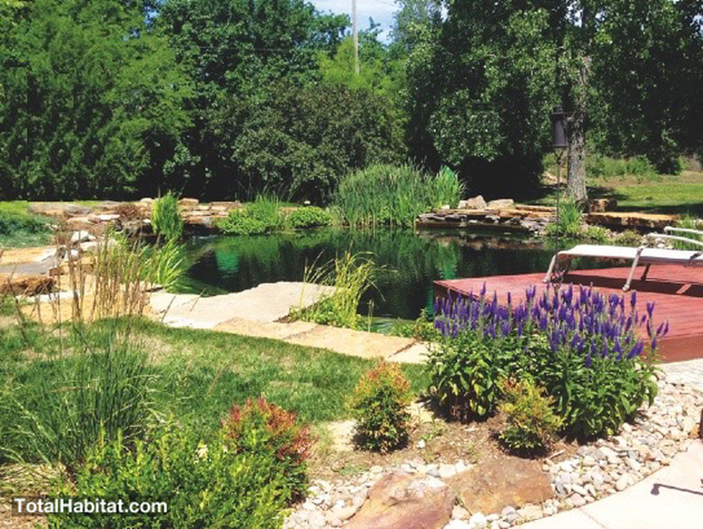 Medium sized Natural Swimming Pool/Pond