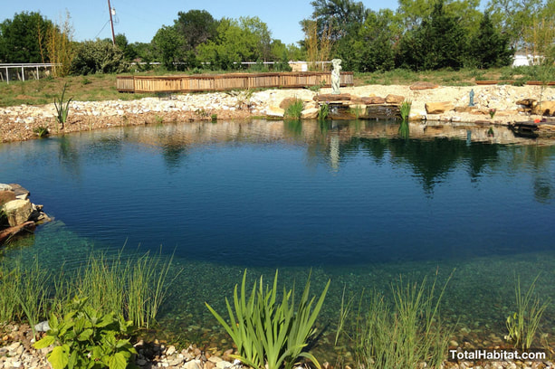 Pond converted to Natural Swimming Pool/Pond