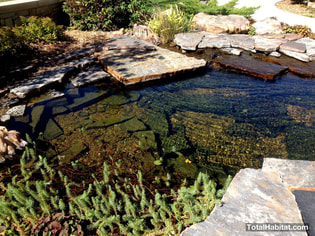 Natural Swimming Pool/Pond with Slab Geology