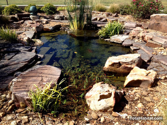 Small Natural Swimming Pool/Pond