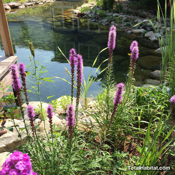 Flowers in Natural Swimming Pool/Pond